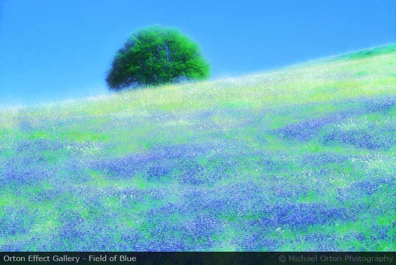 Orton Effect Gallery - Field of Blue
